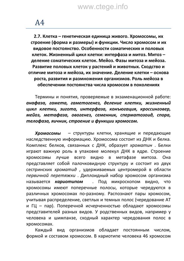 Мейоз спермиев
