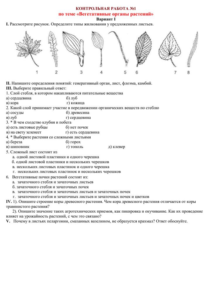 Контрольная работа по биологии вегетативные органы растений ответы 7364