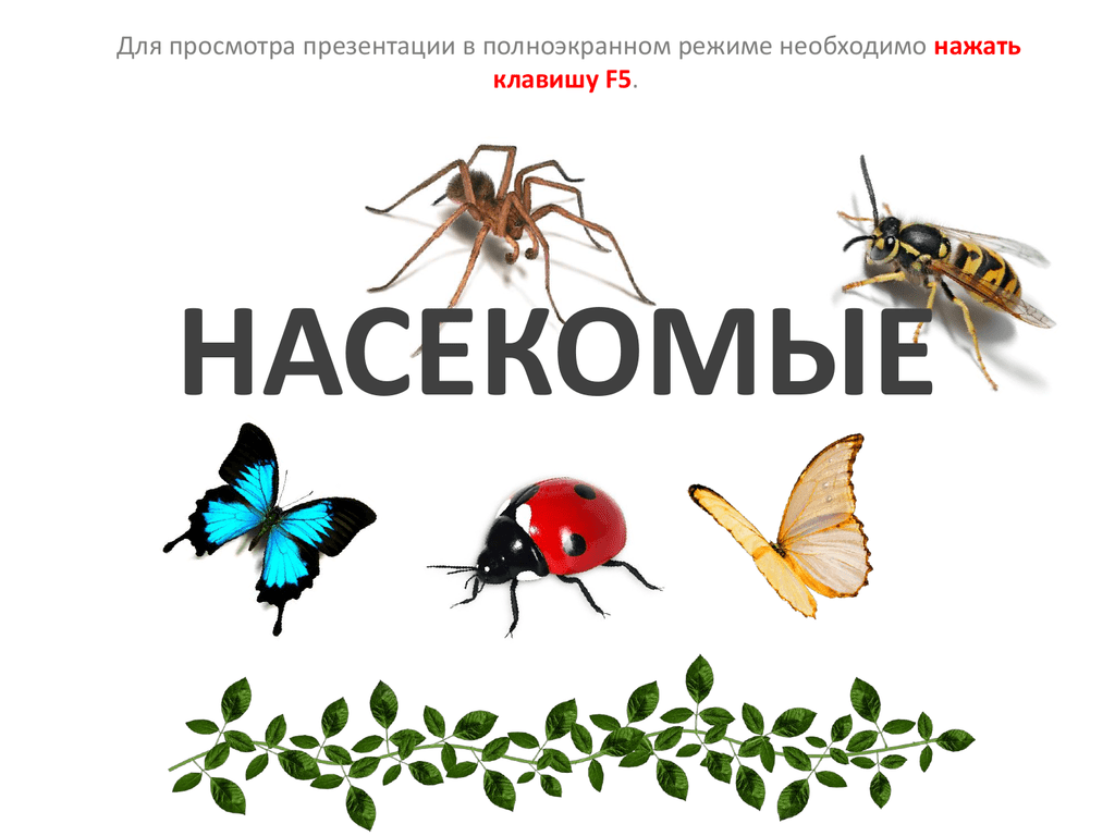 картинки для презентации по теме насекомые только