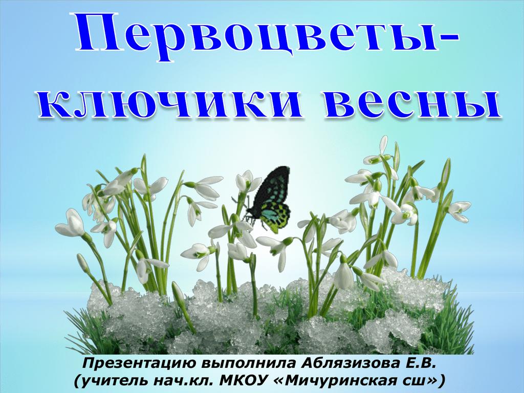 Обои сон великий, первоцвет, Весна, цветок. Цветы foto 2