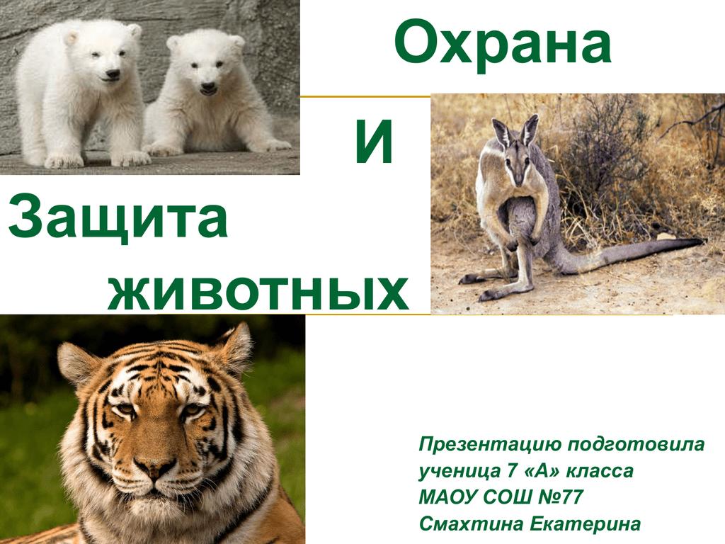 вкусный картинка охраняемые животные касается вопроса жизни