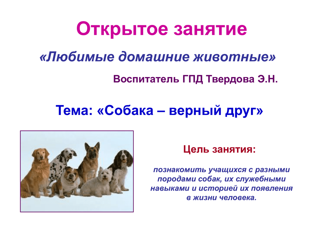 Обои Собака, стойка, друг. Собаки