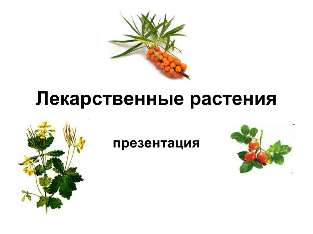временем картинки презентации лекарственные растения объявления