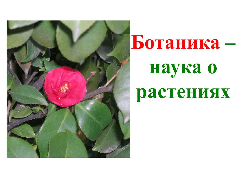Картинки науки о растениях