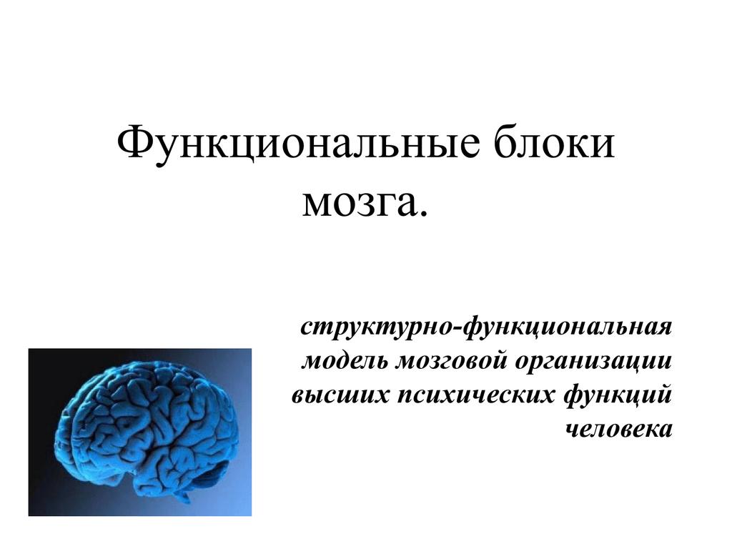 Структурно функциональная девушка модель работы мозга а р лурия высокооплачиваемым работа девушкам новосибирск