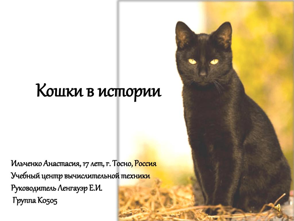 Обои Кошка, tigr, зверь. Кошки