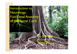 introduction to neurology. functional anatomy of the spinal cord